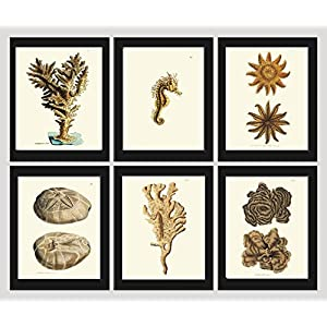 Coral Set of 6 Prints Antique Beautiful Beige Brown Natural Corals Sea Horse Sea Stars Sand Dollar Ocean Marine Nature Home Room Decor Wall Art Unframed