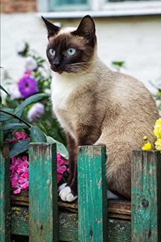 Seal Point Siamese Cat Sitting On a Rustic Teal Blue Fence Journal: 150 Page Lined Notebook/Diary - Seal Point Siamese Cats