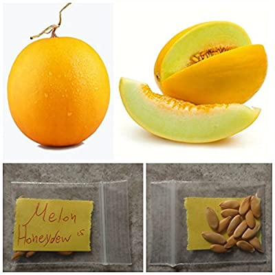 Golden Melon ''Honeydew'' ~15 Top Quality Seeds - Sweet and Amazing Flavor!