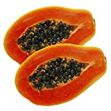Florida Red Royale Papaya Seeds (Carica papaya) 15+ Non-GMO Fruit Tree Seeds in FROZEN SEED CAPSULES for the Gardener & Rare Seeds Collector - Plant Seeds Now or Save Seeds for Years