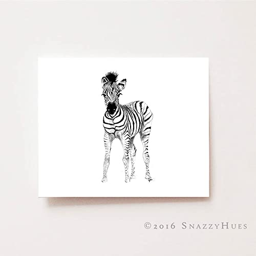 Amazon Com Baby Boy Nursery Wall Art Baby Zebra Fine Art Giclee