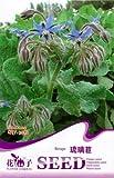 FLOWER GODDESS Borage Blue Starflower Culinary Herb 20 Seeds