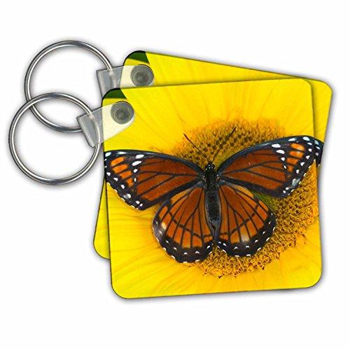 3dRose Viceroy, A Mimic Of The Monarch Butterfly 01 - Llaveros, 5,7 x 5,7 cm, juego de 2 (kc_249980_1)
