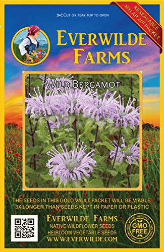 Everwilde Farms - 2000 Wild Bergamot Native Wildflower Seeds - Gold Vault Jumbo Seed Packet