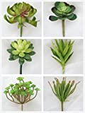 Lily Garden Set of 6 All Kinds of Green Artificial Succulent Plants (Two)