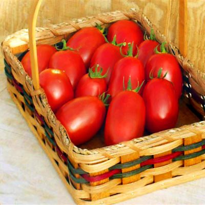 Tomato Mariana F1 - Vegetable Seeds Package - 1,000 Seeds by GardenTrends