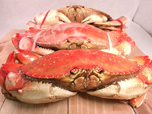 FRESH Cooked DUNGENESS CRABS (3 Large -