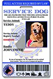 Holographic Service Dog ID Card (Custom) V1