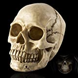 Bennyue-us Life Size Replica Realistic Human Skull Head Bone Model