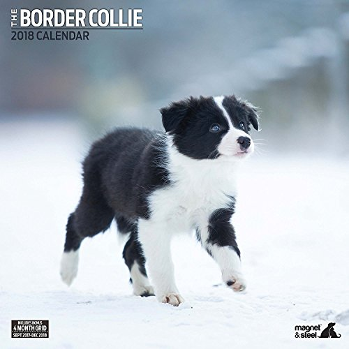 Border Collie 2018 Traditional Wall Calendar