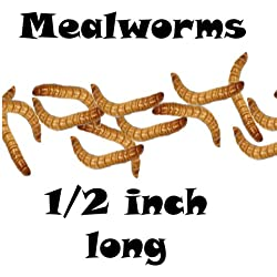 2000ct Live Mealworms, Pet Food for Reptile, Birds, and Fish