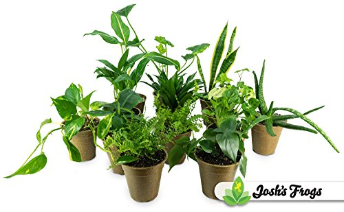 air purifying plants - 7