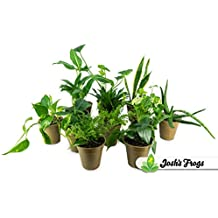 Clean Air Houseplant Multipack Gift Collection (3 Plants)