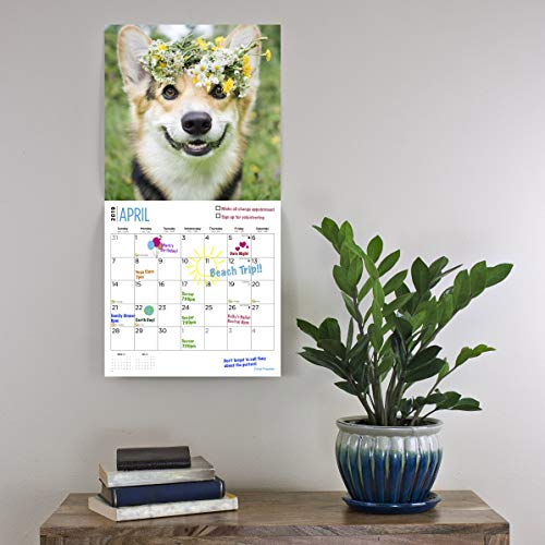 Corgi Puppies 2019 16 Month Wall Calendar 12 x 12 Inches by Bright Day Calendars (Image #4)