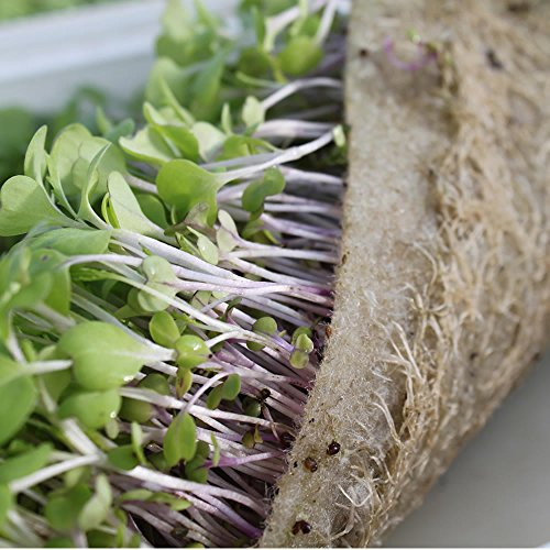 Biostrate hydroponic growing mats 1 roll 9 by 120 for Best growing medium for microgreens