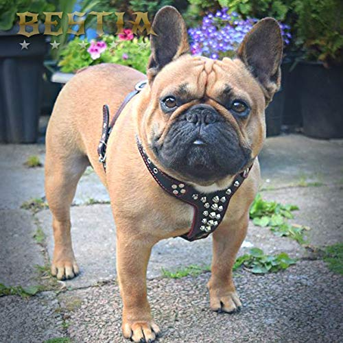 Amazon.com: Bestia - Arnés de piel Tamaño Bulldog francés ...