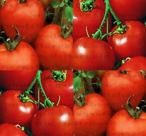 New Rutgers Tomato 150 Seed - Heirloom - aka Jersey Tomato - Combined S&H