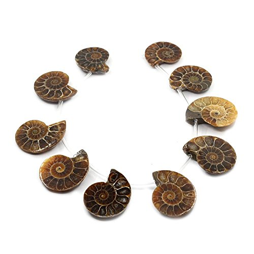 (Justinstones 10pcs Side Drilled Natural Ammonite Fossil Loose Gemstone Beads)