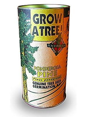 Ponderosa Pine Grow Kit