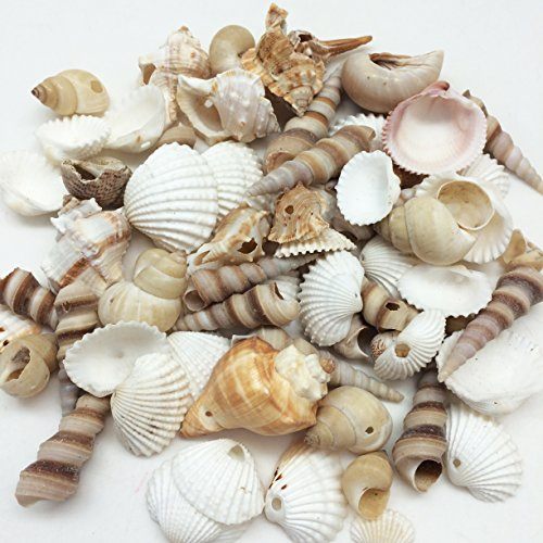 Scallop Shell Beads - PEPPERLONELY Small Drilled Shell Mix Sea Shells, 6 OZ Apprx. 60+ PC Shells, 1-1/2 Inch