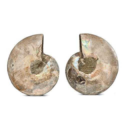 KALIFANO Extinct Natural Ammonite Shell Pair Fossil Stone - Madagascar by ALEXANDER KALIFANO (Image #3)