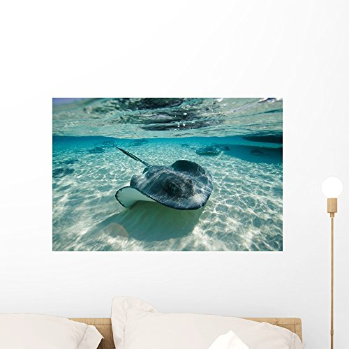 Southern Stingrays Swimming Stingray Wall Mural by Wallmonkeys Peel and Stick Graphic (24 in W x 16 in H) WM33485 Southern Stingray Dasyatis Americana