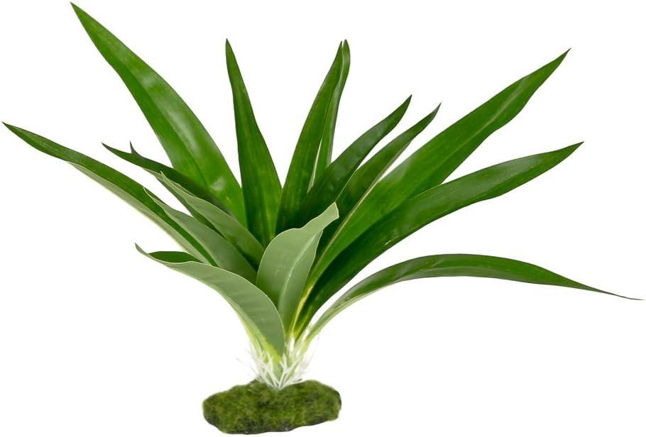 Green BLUE RIBBON PET Products 030157017712 Colorburst Florals Dracaena Deremensis Broad Leaf