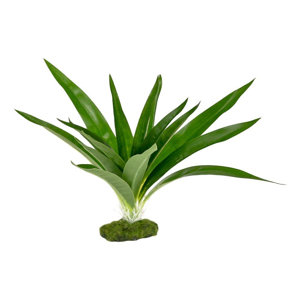 Blue Ribbon PET PRODUCTS 030157017712 Colorburst Florals Dracaena Deremensis Broad Leaf, Green