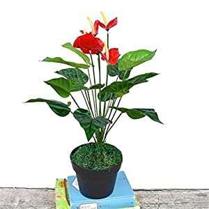 ZJJZH Artificial Decorative Flowers Simulation Large Beam Film anthurium Bunch Green Leaf Fake Plant Table Coffee Table Set Flower Interior Decoration Festive Flower Artificial Flowers。 116