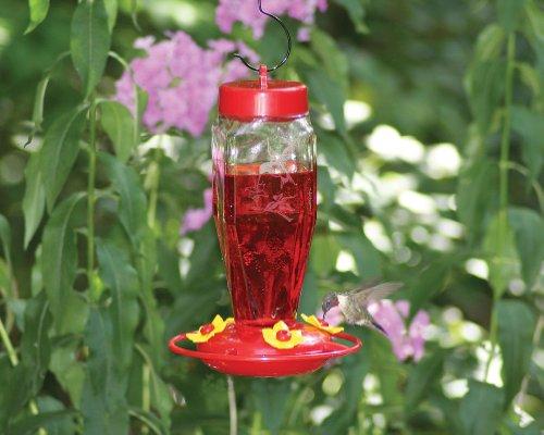 Superb Amazon.com : Homestead 24 Oz Hummingbird Feeder (Etched Hardened Glass)    3918 : Pet Bird Feeders : Garden U0026 Outdoor