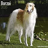Borzoi Calendar - Dog Breed Calendars - 2019 - 2020 Wall Calendars - 16 Month by Avonside