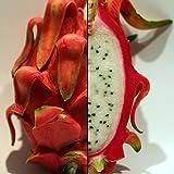 "Dragon Fruit Plant - Hylocereus - Pitaya/Strawberry Pear - 3"" Pot"