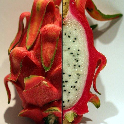 Dragon Fruit Plant Hylocereus Strawberry product image