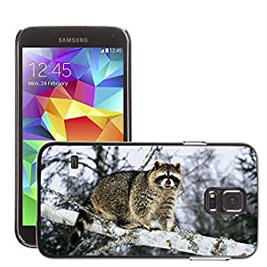 Hot Style Cell Phone PC Hard Case Cover // M00046428 raccoon a on tree wild branch animals // Samsung Galaxy S5 i9600