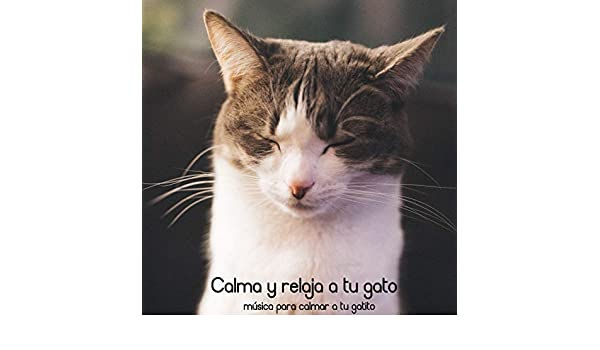 Gatitos Tranquilos by Cat Music Dreams, and Pet Music Therapy RelaxMyCat on Amazon Music - Amazon.com