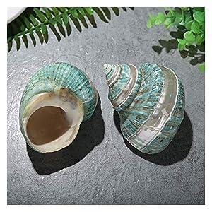 51HoLyl9zWL._SS300_ Best Seashell Wedding Decorations