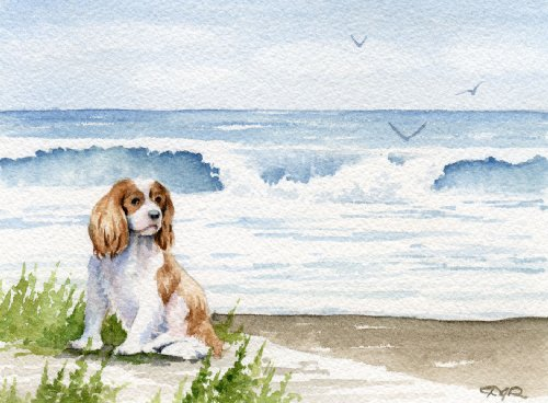 Cavalier King Charles Spaniel Art Print by Watercolor Artist DJ Rogers ()