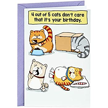 Hallmark Shoebox Funny Birthday Greeting Card Cats Dont Care That Its Your