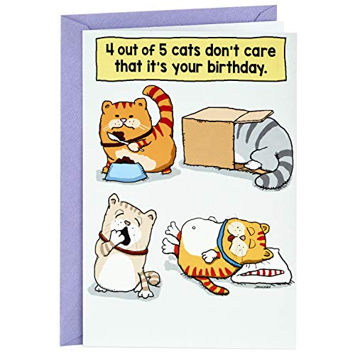 Hallmark Shoebox Funny Birthday Card (Cats Don't Care That It's Your Birthday) (Best Birthday Greeting Cards For Sister)