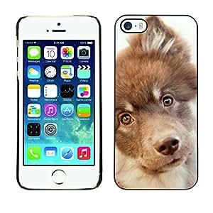 Vortex Accessory Carcasa Protectora Para APPLE iPHONE 5 / 5S - Retriever Mutt Mongrel Hound Terrier -