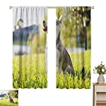 hengshu Alaskan Malamute Eclipse Blackout Curtains Klee Kai Puppy Sitting on Grass Looking Up Friendly Young Cute Animal Patio Door Curtains Living Room Decor W62 x L72 Inch Multicolor 9
