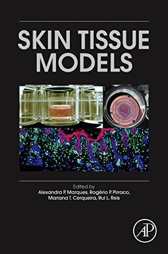 Skin Tissue - Skin Tissue Models