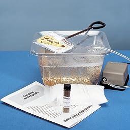 Brine Shrimp Hatchery Kit