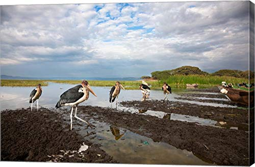 Marabou Storks, Fish Market in Awasa, Ethiopia by Martin Zwick/Danita Delimont Canvas Art Wall Picture, Gallery Wrap, 42 x 28 inches ()