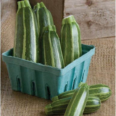 David's Garden Seeds Zucchini Bush Baby T120P (Green) 25 Organic Hybrid Seeds