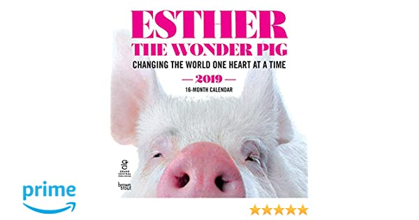 Esther The Wonder Pig 2019 12 X 12 Inch Monthly Square Wall Calendar