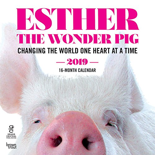 Esther the Wonder Pig 2019 12 x 12 Inch Monthly Square Wall Calendar by Hachette, Inspiration Motivation Designer Pig Animals (Multilingual Edition)