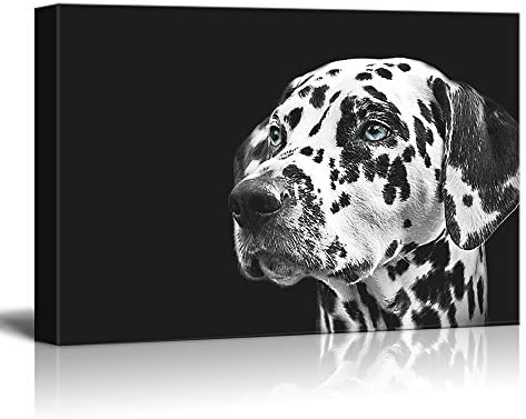 Dogs Series A Dalmatian Spotty Dog Against Black Background