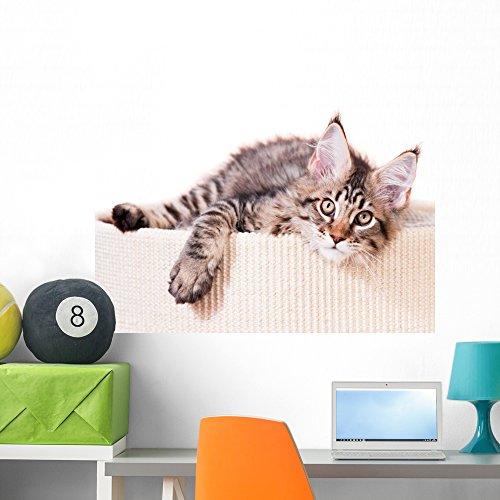 (Wallmonkeys Portrait of Domestic Black Tabby Mackerel Maine Coon Kitten Wall Decal Peel and Stick Graphic WM359270 (36 in W x 27 in H))