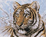 Plaid Creates Paint by Number Kit (16 by 20-Inch), 21674 Siberian Tiger